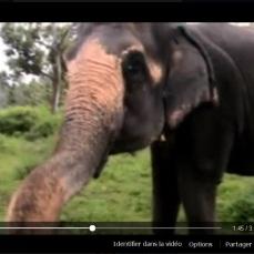 video elephant